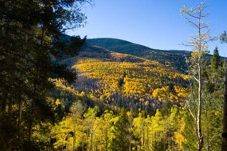 basin mountain: Beautiful fall colors in the mountains of the Santa Fe Ski Basin