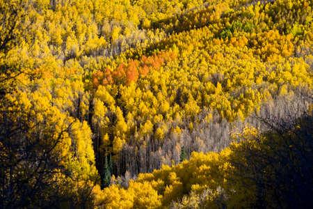 aspen leaf: Beautiful fall colors in the mountains of the Santa Fe Ski Basin