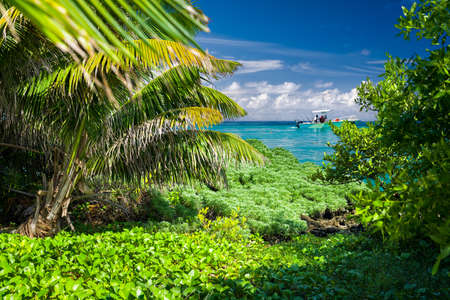Lush vegatation framing the vivid turquoise Caribbean sea as seen from the shore of Goffs Caye in Belize Stock Photo