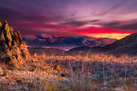 big: Impresionante puesta de sol en el Parque Nacional Big Bend con brillantes flores de color naranja en el primer plano del Ocotillo Foto de archivo
