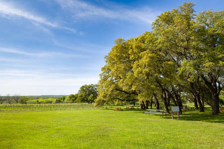 adjacent: Central Texas vineyard featuring blue skies overhead and an adjacent oak tree--shaded picnic area