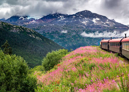 cloud capped: Passenger train moving through a field of pink and red wildflowers with a glacier in the background near Skagway, AK