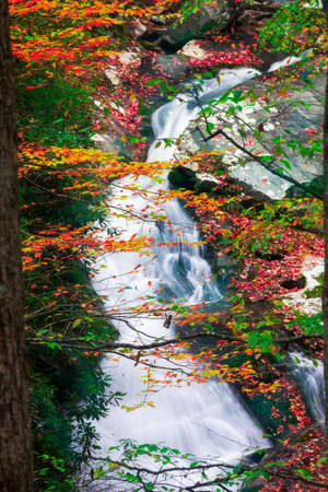 autumn colors: Cascading creek in the  Great Smoky Mountains National Park with autumn colors on display