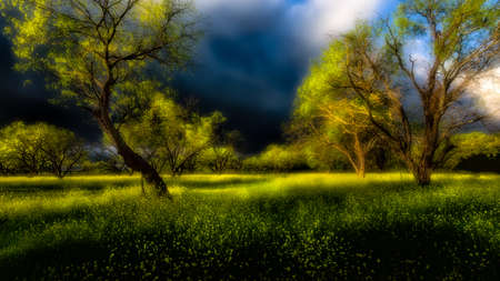 creates: An approaching spring storm creates a dramatic scene in a Texas wildflower field Stock Photo