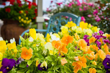 Stunning arrangement of petunias on a bright spring day