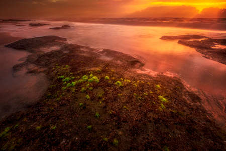 Colorful sunrise on a Florida beach with patches of seaweed in the foreground