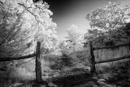 Rural Texas fenced in pasture and fence Reklamní fotografie