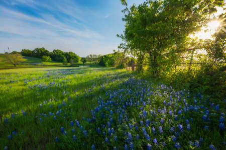 Rural Texas Spring Flowers Reflecting on a Pond Reklamní fotografie