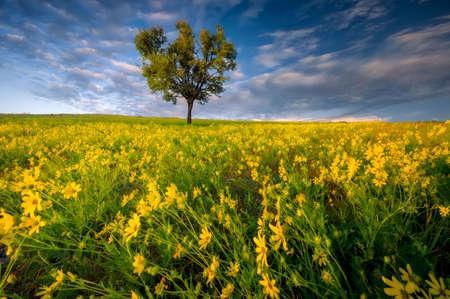 Spring Wildflowers in an Open Field