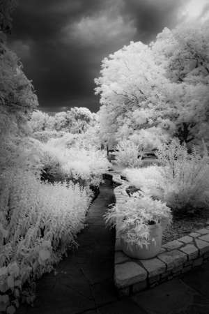 Botanic Garden Under an Ominus Texas Sky Reklamní fotografie