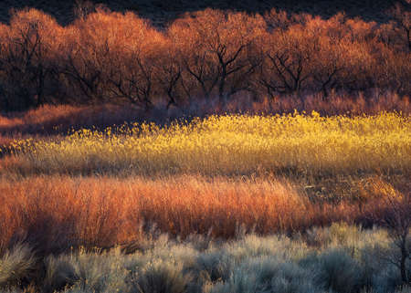 Colorful Trees and Brush near Bishop, CA 版權商用圖片