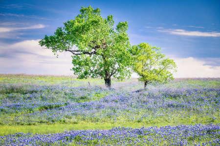 Texas Wildflowers at Sunrise 版權商用圖片