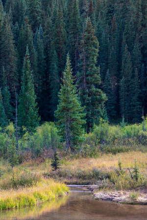 Tranquil Stream in Southwest Colorado