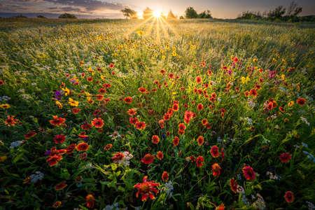 Fiield of colorful spring wildflowers in rural Texas 版權商用圖片