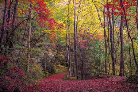 Winding Foot Path Coursing Through Fall Colors