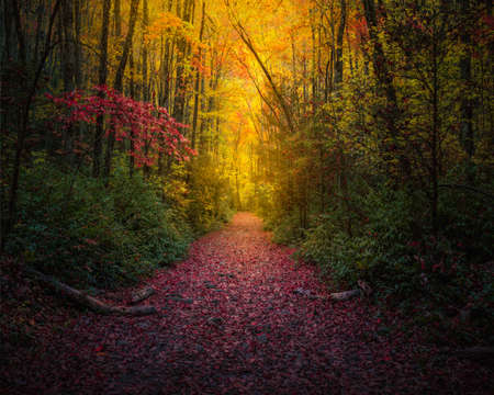 Leaf-Covered Foot Path Coursing Through Fall Colors