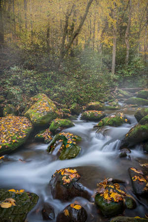Gently Flowing Stream Coursing Through Fall Colors on a foggy Morning