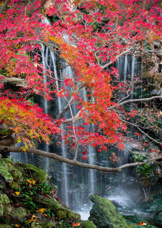 Fall Foliage in the Japanese Garden