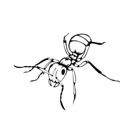 Sketch design of illustration ants on white background.