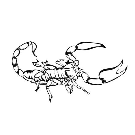 Sketch of design scorpion on White background