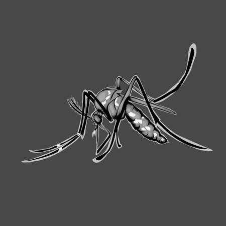 Simple design of illustration mosquito on grey background Иллюстрация