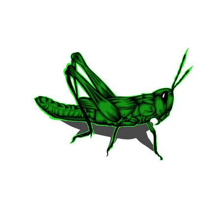 Simple design of illustration Grasshopper Green on White background