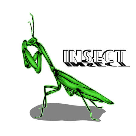 Simple design of illustration Praying mantis insect Vettoriali