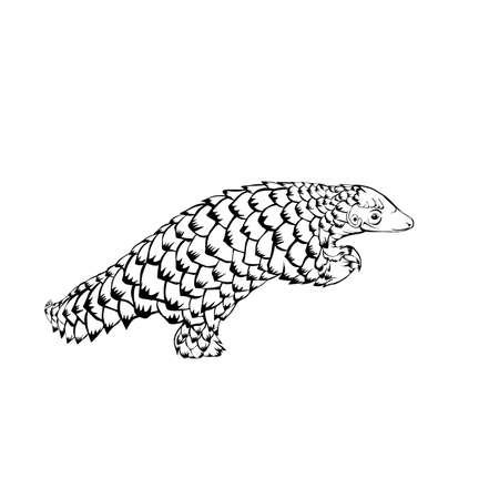 Sketch design of illustration pangolin on White background