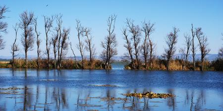kunming: Kunming Dianchi surrounding wetland landscape