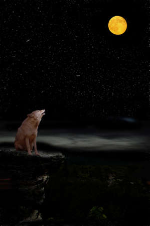 Coyote howling at moon Stock Photo