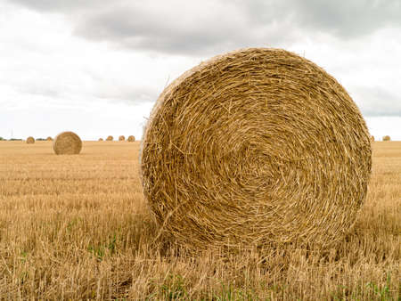 Hay Rolls in a farm field photo