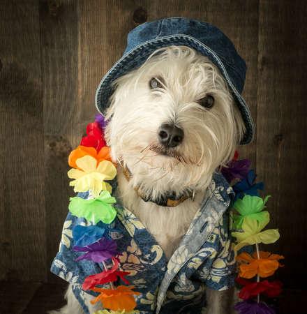 Hawaiian Dog photo