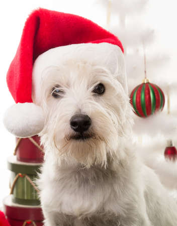 holidays: White Christmas Puppy Dog