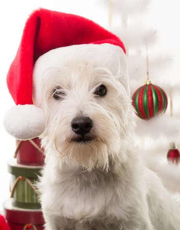 dog christmas: White Christmas Puppy Dog