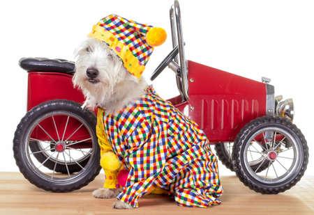 Circus Clown Dog with Clown Car