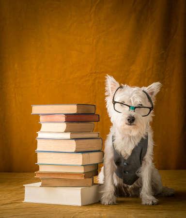 Back to School Nerd Teacher Dog