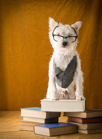 Back to School Nerd Dog Stock fotó
