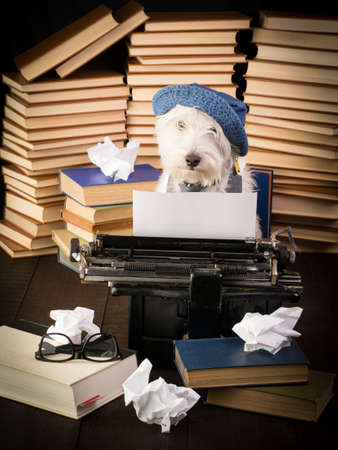 novelist: The Novelist