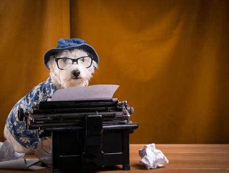 Journalist Dog Stock Photo - 15998863