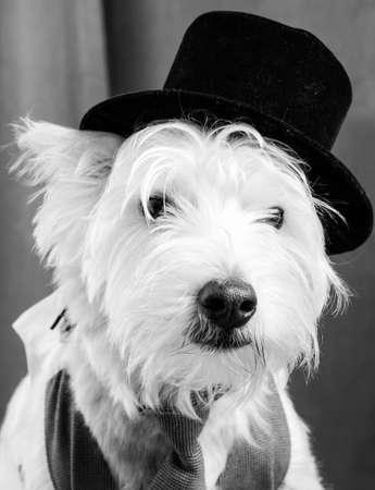 Veteran Stage Actor Dog