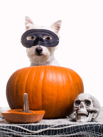 Happy Halloween Dog Stock Photo