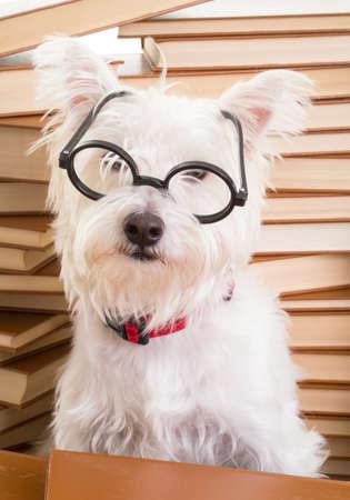 Smart dog wearing glasses