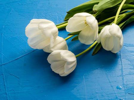 Fresh spring white tulips over blue texture background Stock fotó