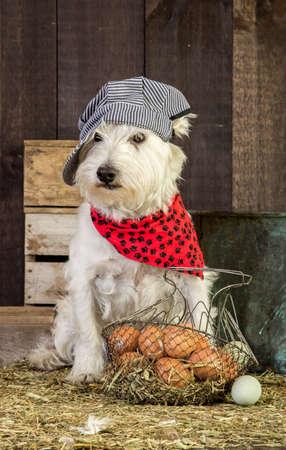 perros vestidos: Animales de granja huevos reunión