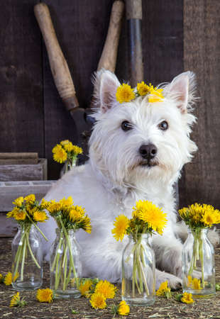 Flower Child Dog Stock fotó