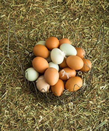Farm fresh eggs Stock fotó - 19881879