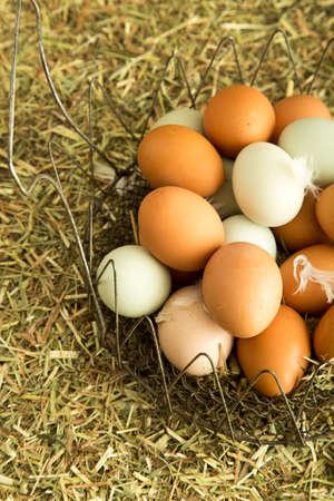 Farm fresh eggs Stock fotó