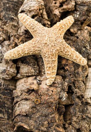 A marine animal starfish against a rugged background.