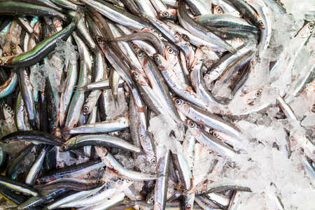 anchovies placed on fish shop