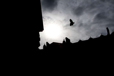 dove flying over St. Pauls cathedral in london against light